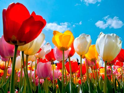 Ректорат та колектив Дніпропетровського державного університету внутрішніх справ вітає з весняними святами!
