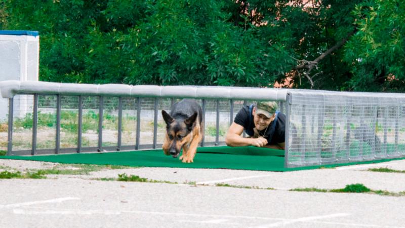 У Дніпрі змагаються розшукові собаки