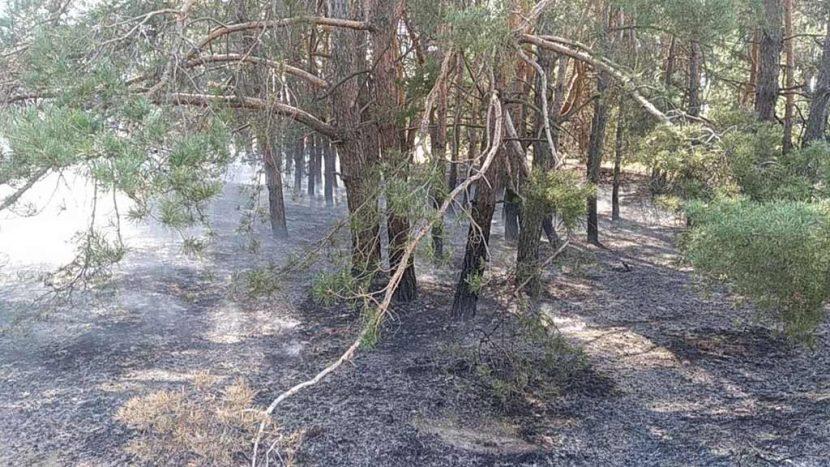 Курсанти ДДУВС допомогли врятувати ліс від масштабної пожежі